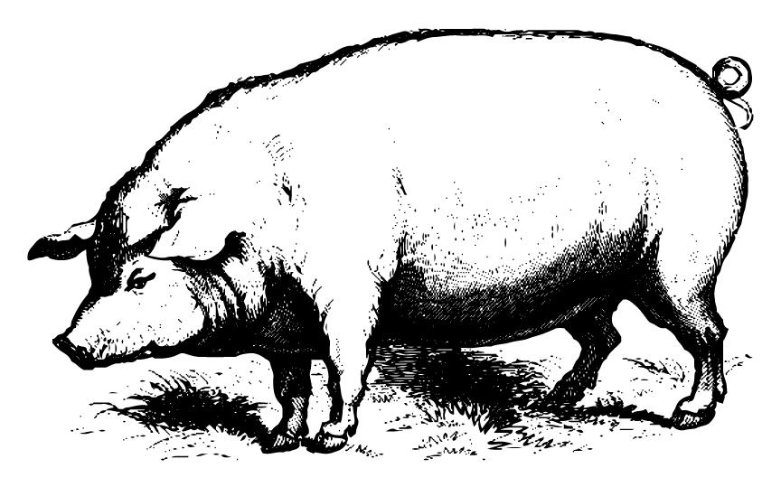 Hog clipart two pig. Cartoon illustration drawing