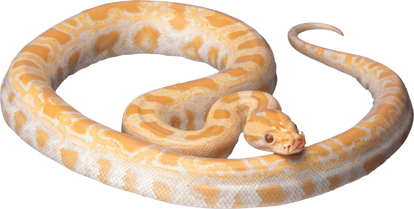 Yellow png free images. Snake clipart realistic