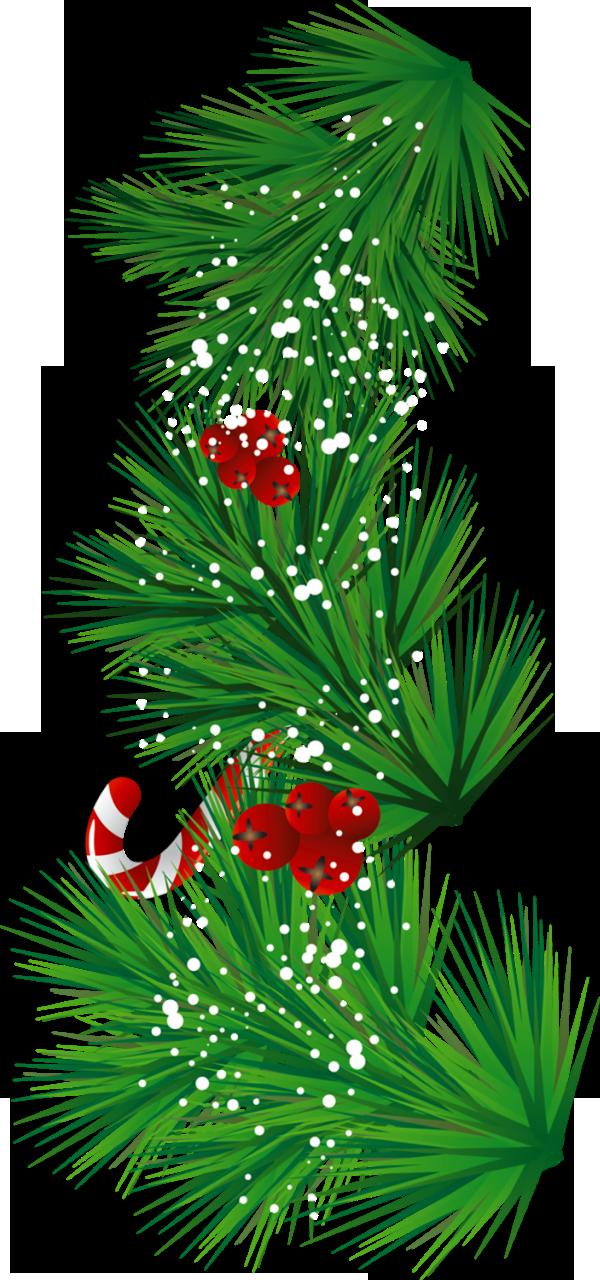 Pine clip art scrapbook. Holidays clipart branch