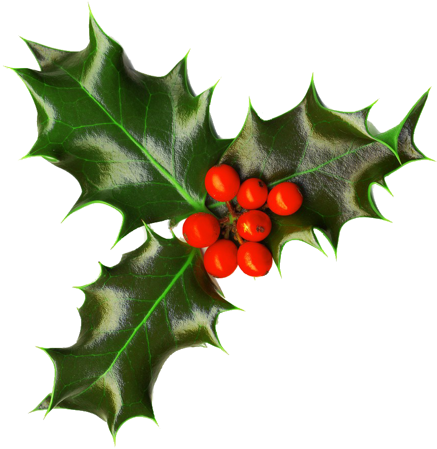 Deck the kitchen with. Holly clipart boughs
