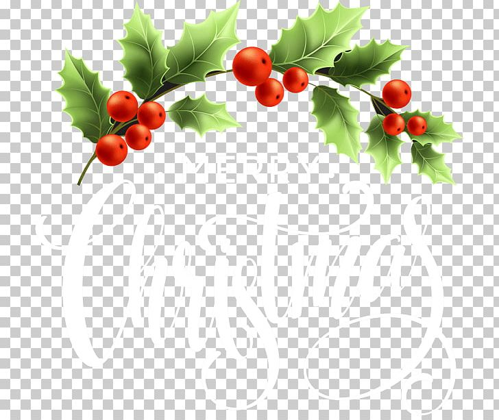 Aquifoliales lingonberry superfood png. Holly clipart cranberry