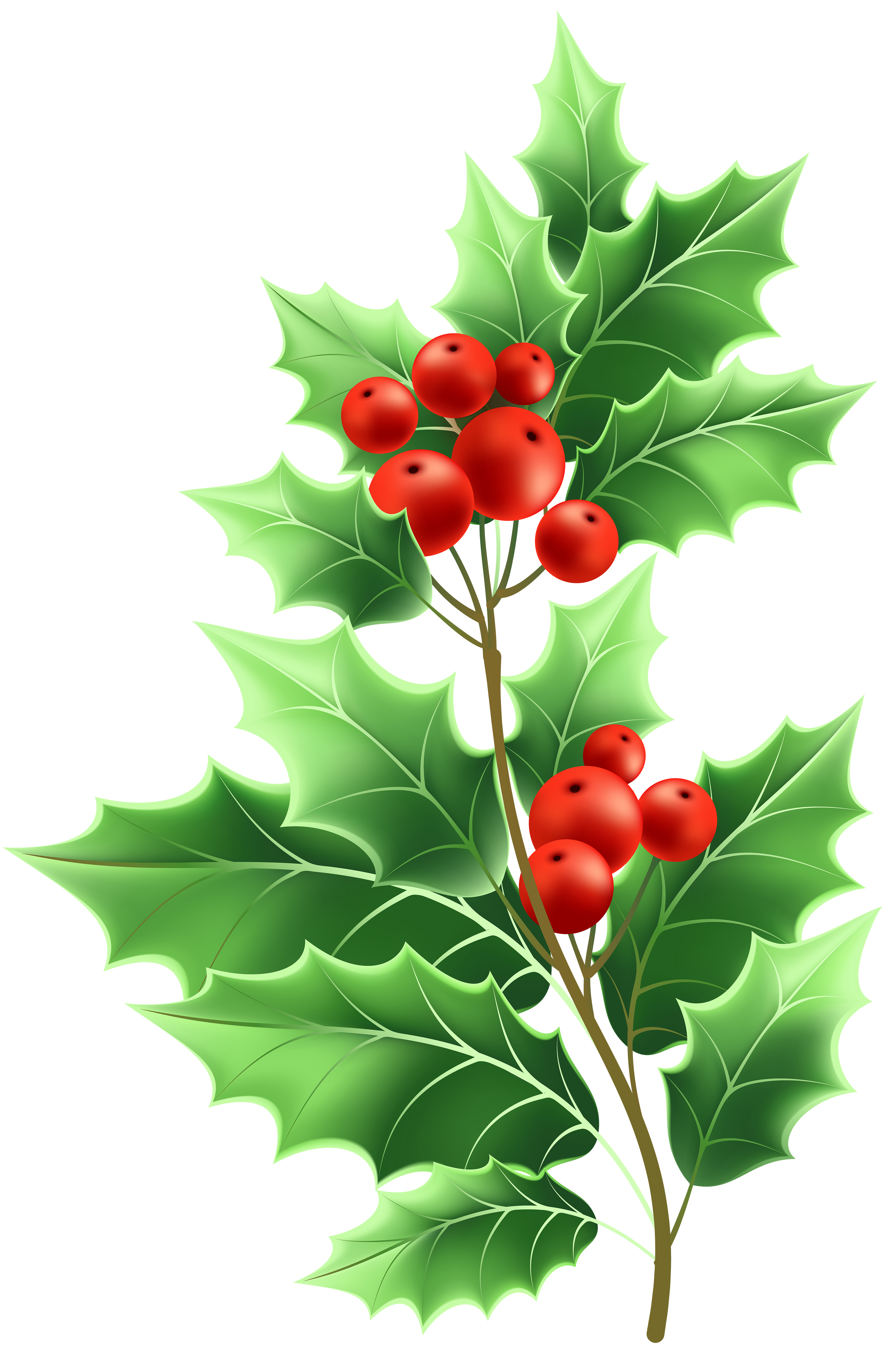 Holly clipart file. Image formats lossless compression