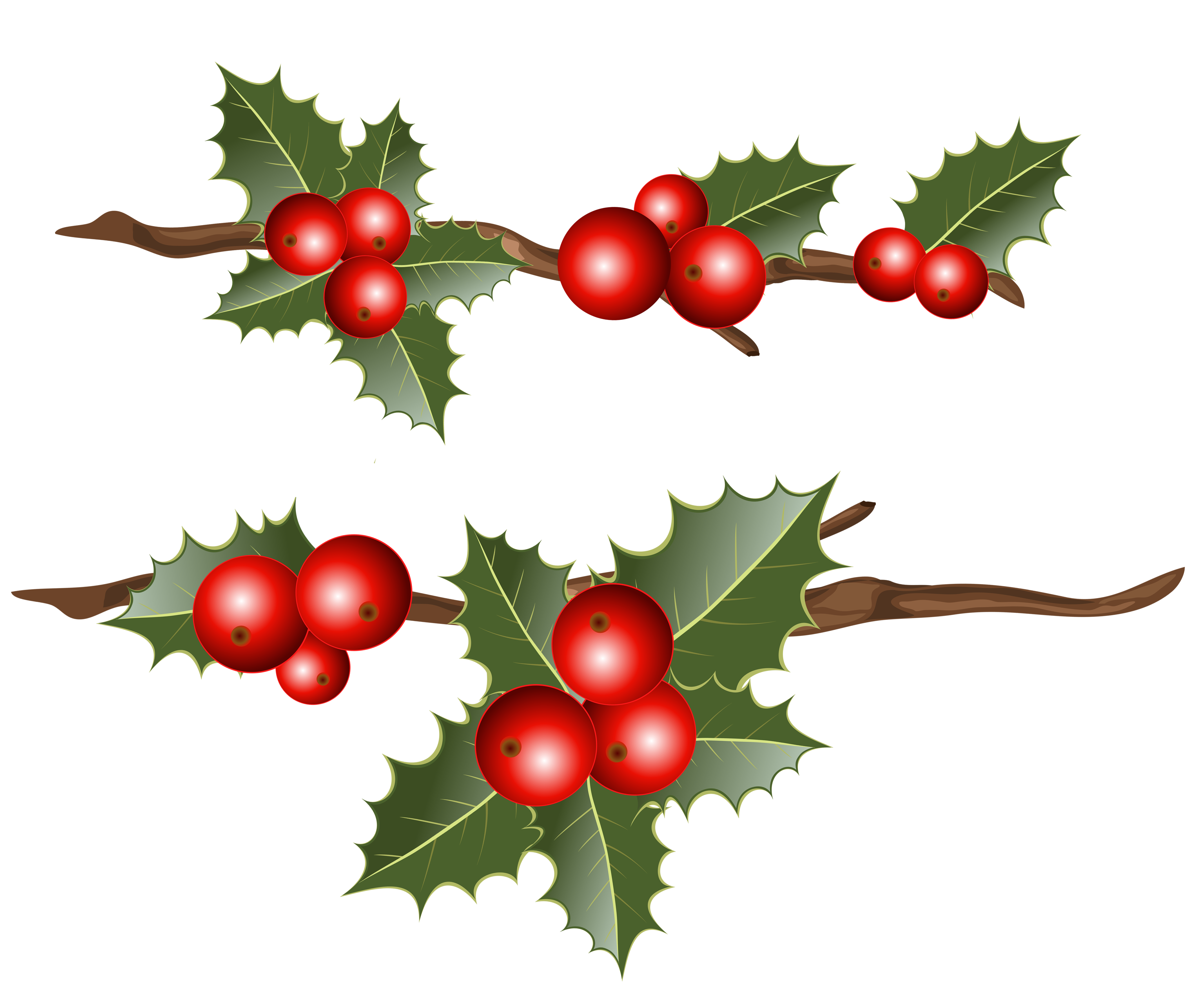 Holly clipart holly branch. Branches png image gallery
