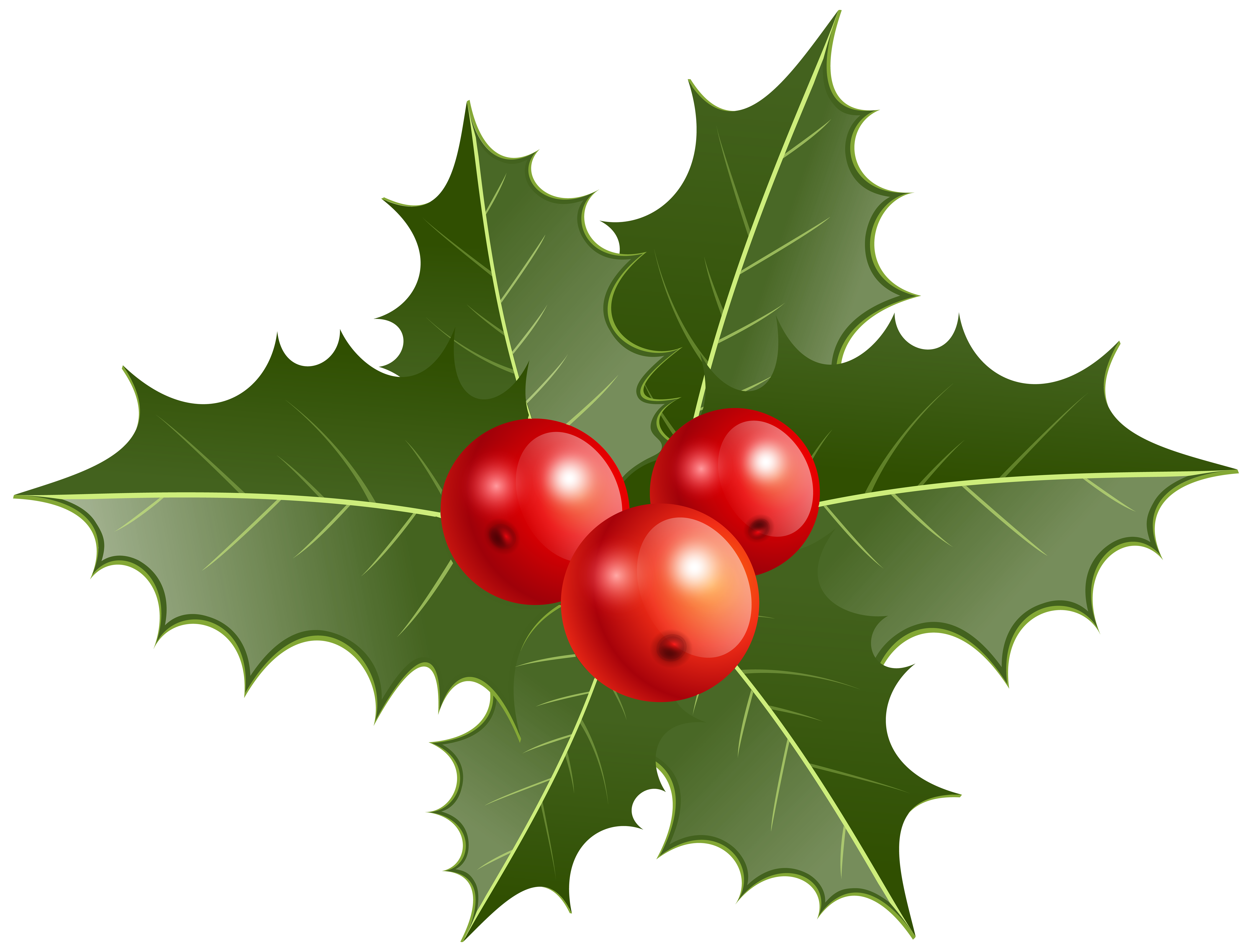 Christmas png clip art. Holly clipart holly branch