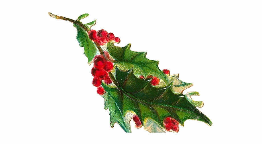 Holly clipart holly branch. Free christmas clip art