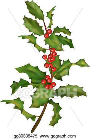 Vector stock with berries. Holly clipart holly branch