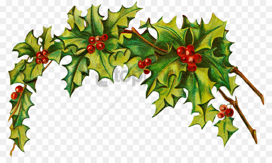 Christmas png day download. Holly clipart holy