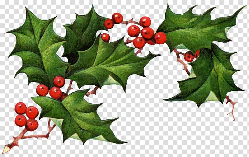 Holly clipart holy. Common american christmas king