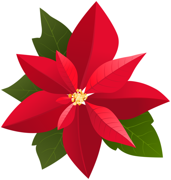 Gallery christmas png . Holly clipart poinsettia