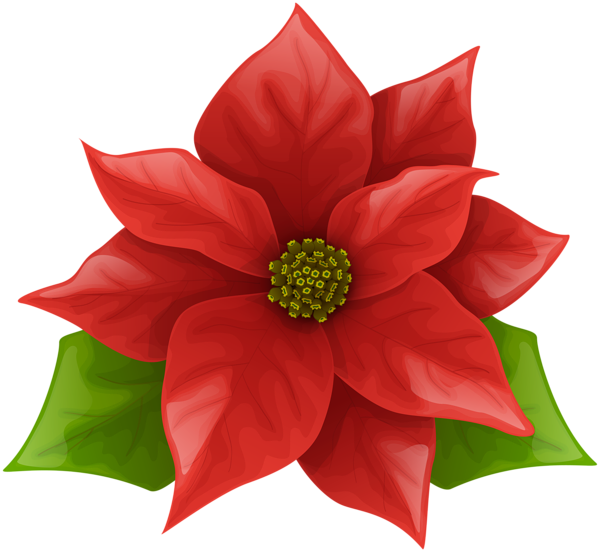 Holly clipart poinsettia. Gallery recent updates