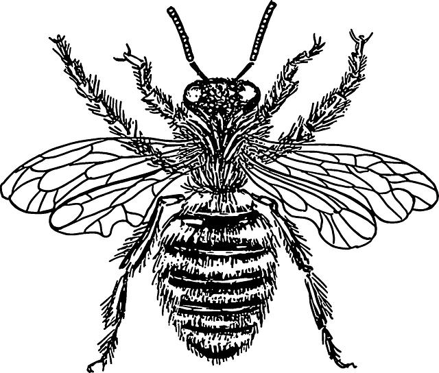 Honey clipart sketch. Free image on pixabay
