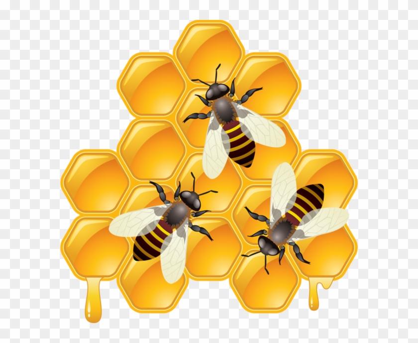 Transparent hd png . Honeycomb clipart