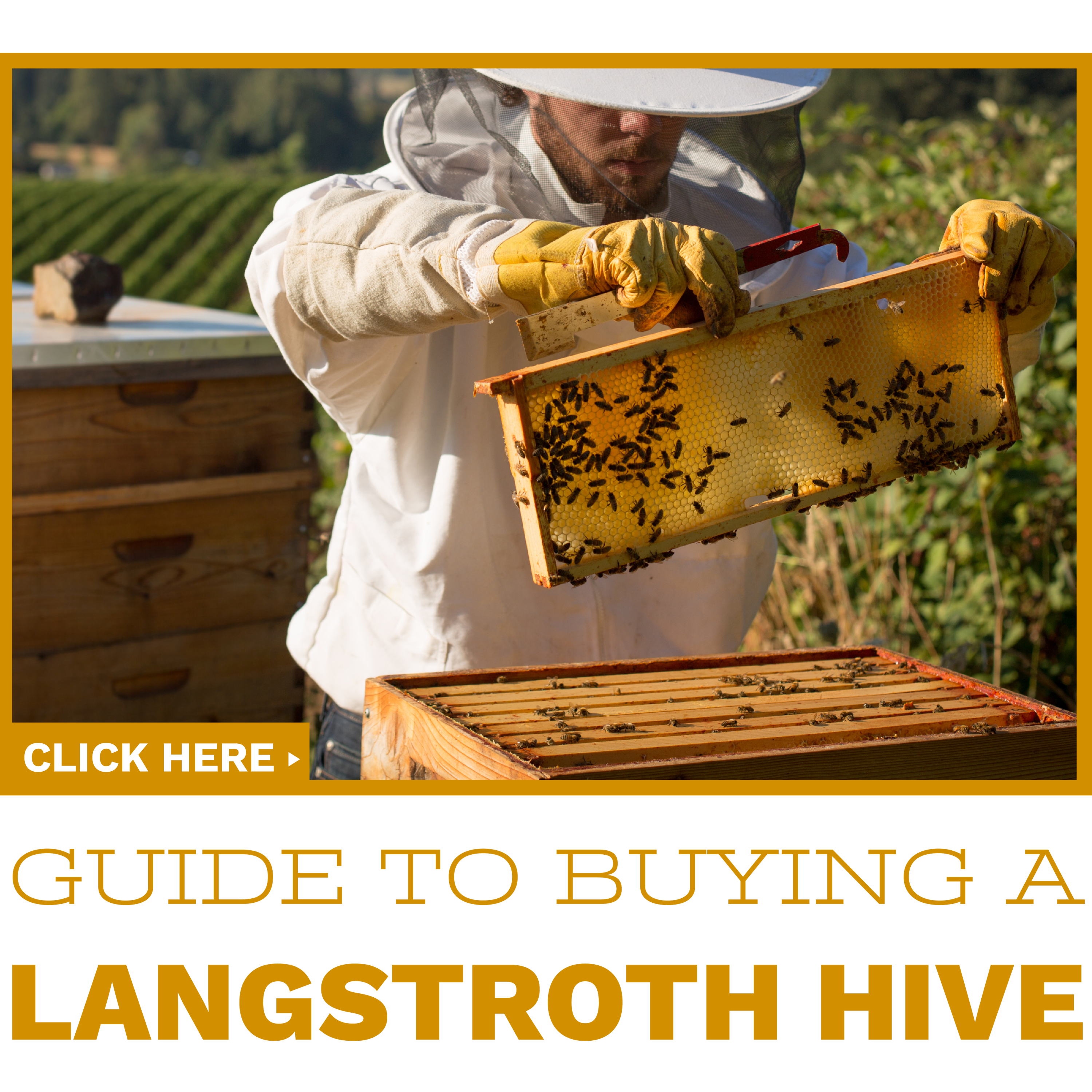 Buying your first beehive. Honeycomb clipart bee cell