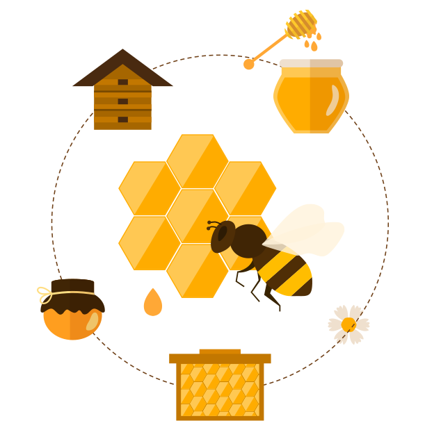 Honeycomb clipart bee cell. All about bees greenbowus