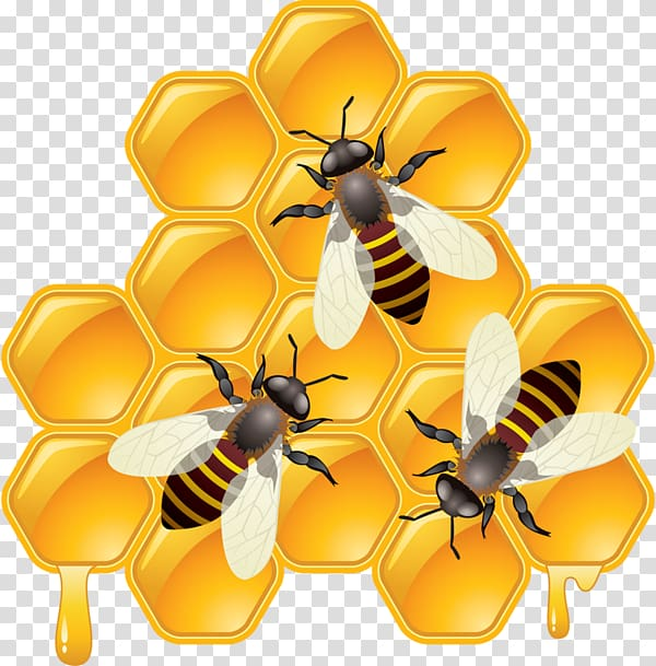 Honeycomb clipart bee pollination. Drawing transparent background png