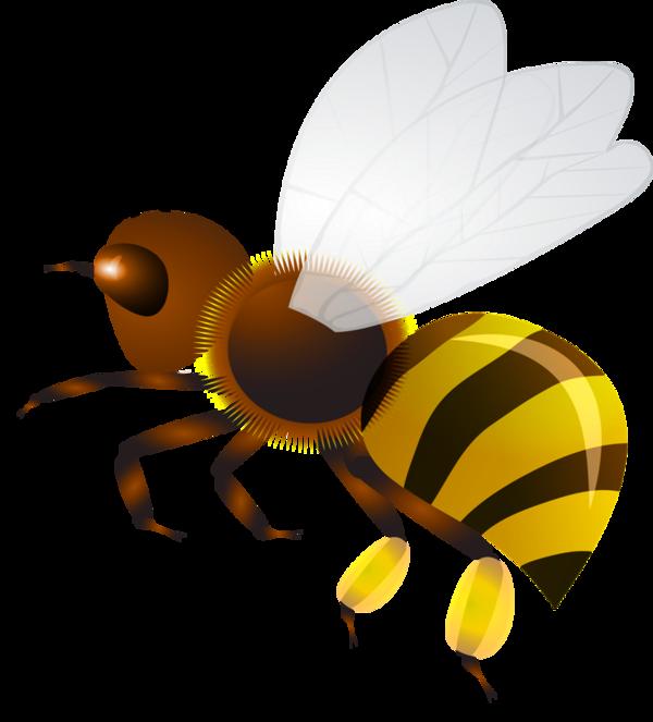 Honeycomb clipart hornet nest. Abeilles bees pinterest clip