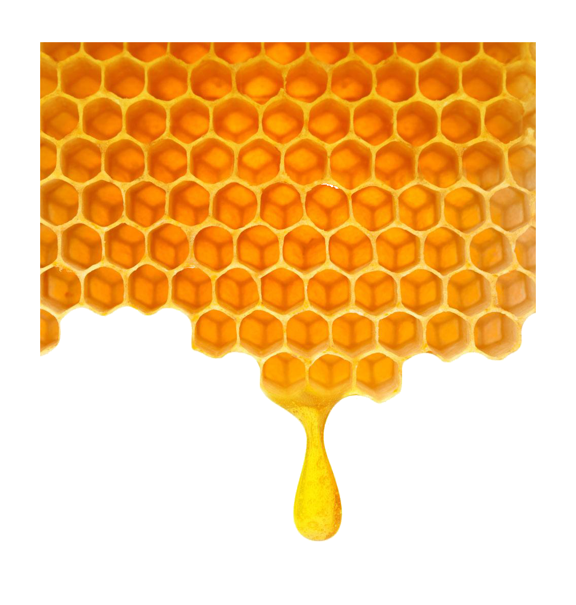 Honeycomb clipart transparent. Bee poly honey png