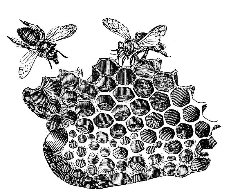 bee images honey. Honeycomb clipart vintage