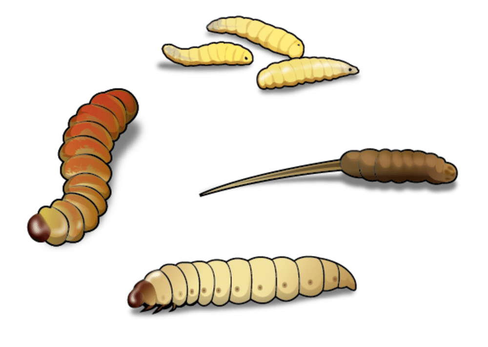 Four best worms for. Worm clipart plant insect