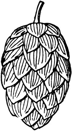 Hops clipart. Pen and ink food