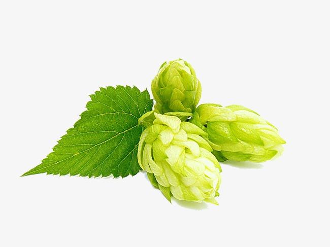 Hops clipart. Fig transparent beer png