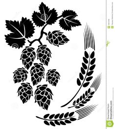 best and images. Hops clipart barley