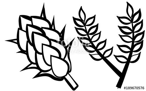 Black and white hop. Hops clipart beer ingredient