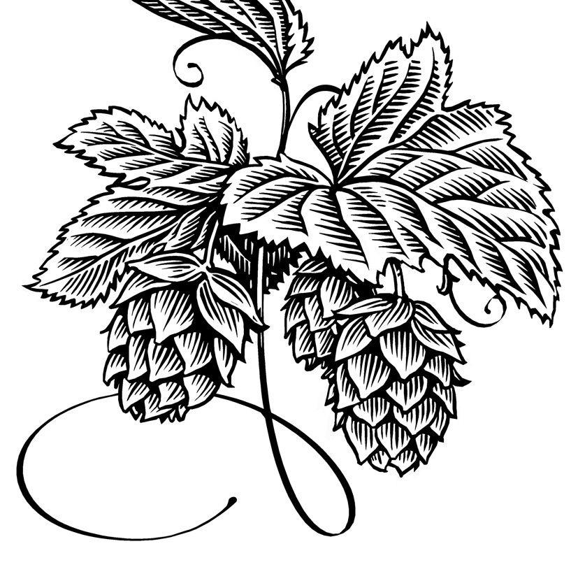 Simon henshaw illustration . Hops clipart drawing