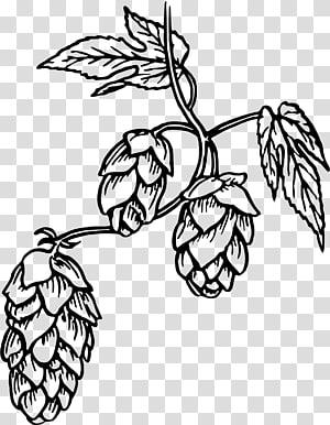 Beer common hop transparent. Hops clipart sketch