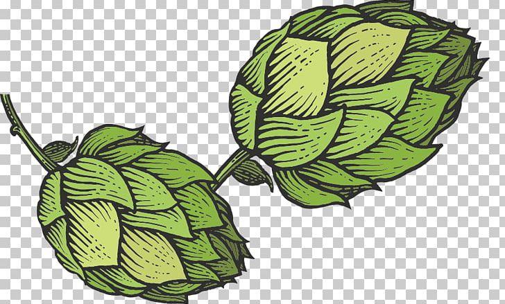 Hops clipart sketch. Beer common hop png