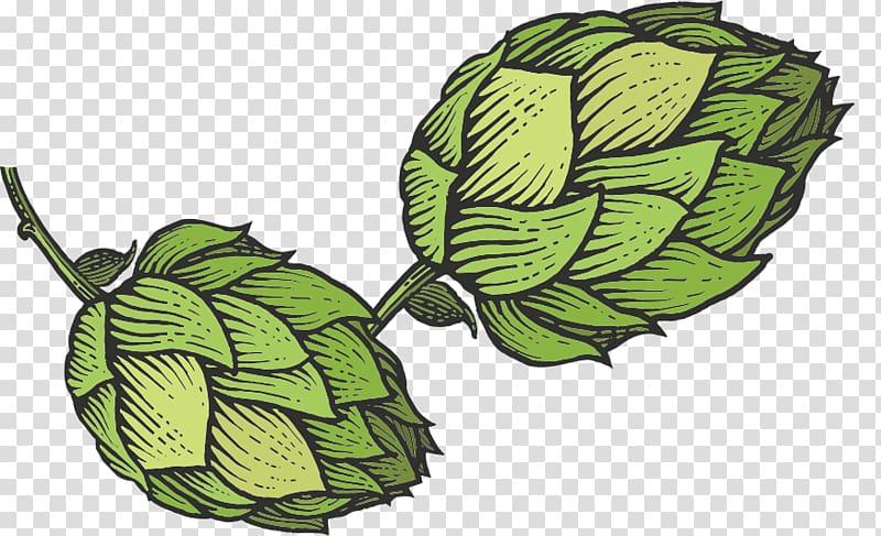 Beer common hop sketch. Hops clipart transparent background