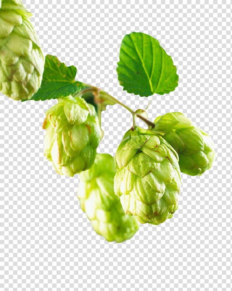 Hops clipart transparent background. Green fruit beer common