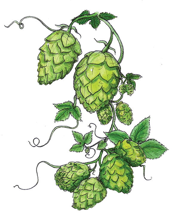 The great revival abv. Hops clipart vintage