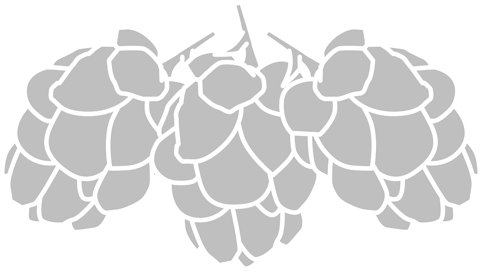 Hop png black and. Hops clipart wheat