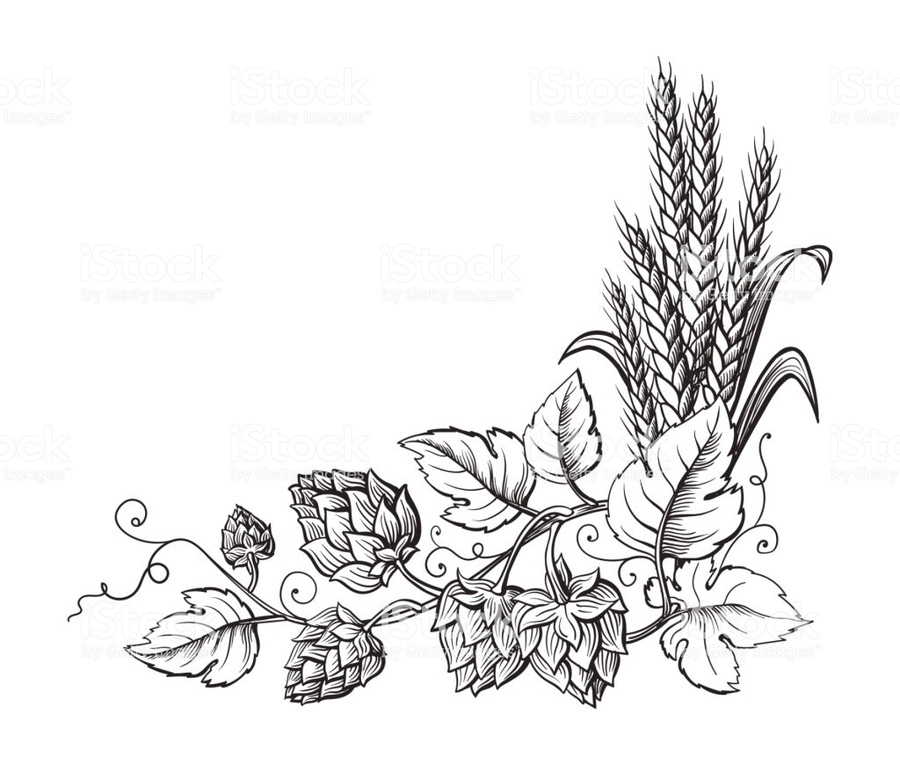 Hops clipart wheat. Download hop beer common