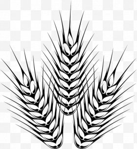 And barley images png. Hops clipart wheat