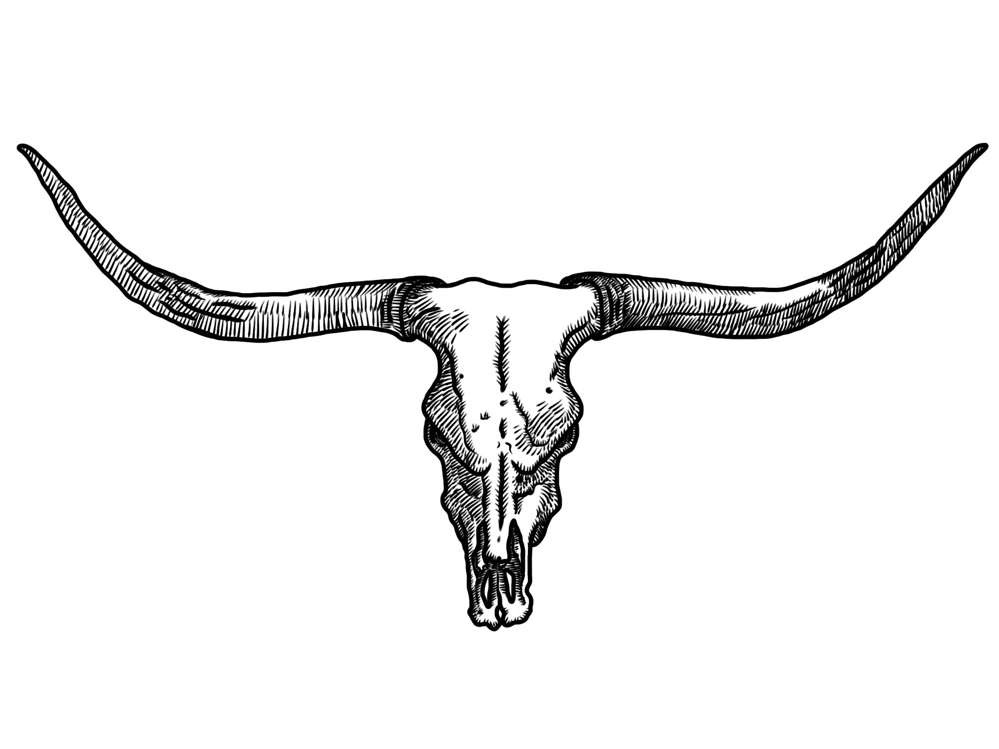 Free steer head cliparts. Longhorn clipart skull