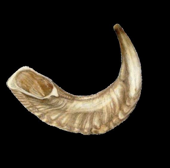 Horn clipart shofar. The adar sivan beth