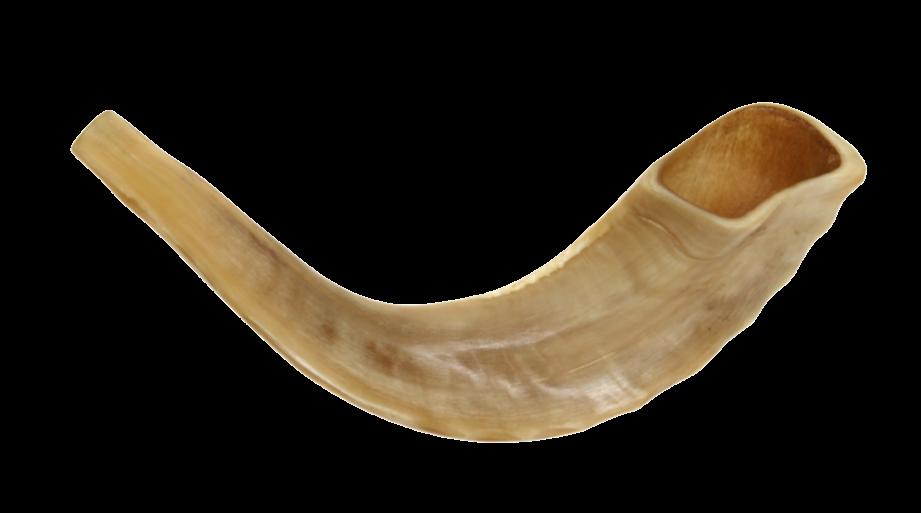 Horn clipart shofar. Png rosh hashanah transparent