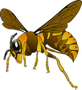 Hornet clipart. Brown yellow clip art