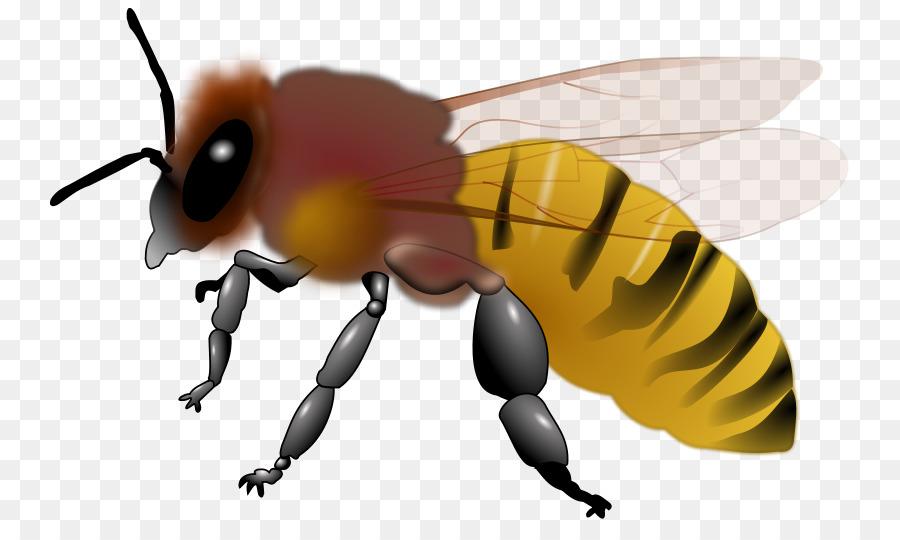 Hornet clipart bee. Honey background illustration cartoon