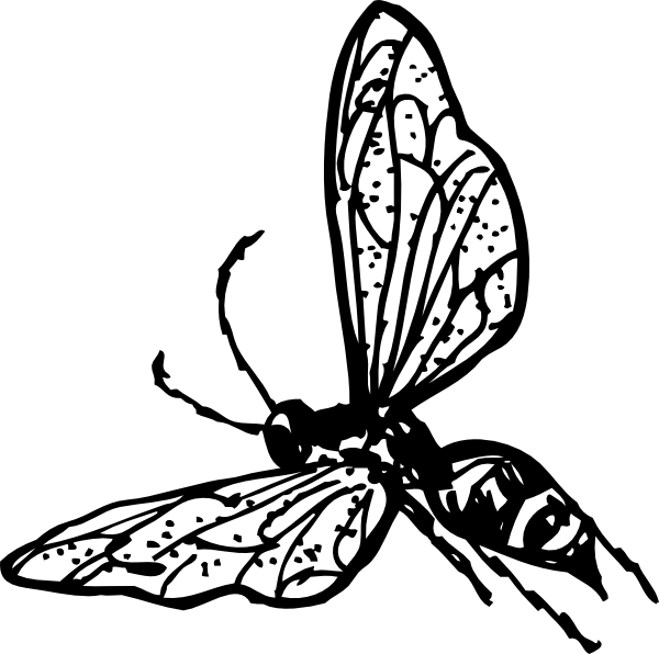 Hornet clipart drawing. Wasp clip art at