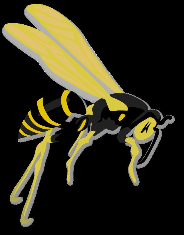 Hornet clipart hatton. Clip art cliparts co