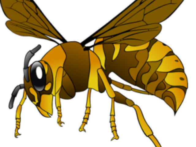 Hornet clipart kearsley. Cliparts free download clip