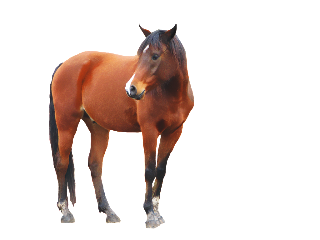 Horse clipart domestic animal. Twenty two isolated stock