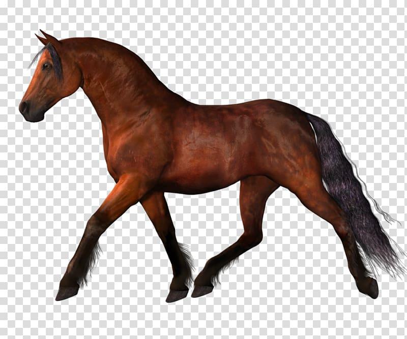 Horse clipart equine. Mustang stallion horses transparent