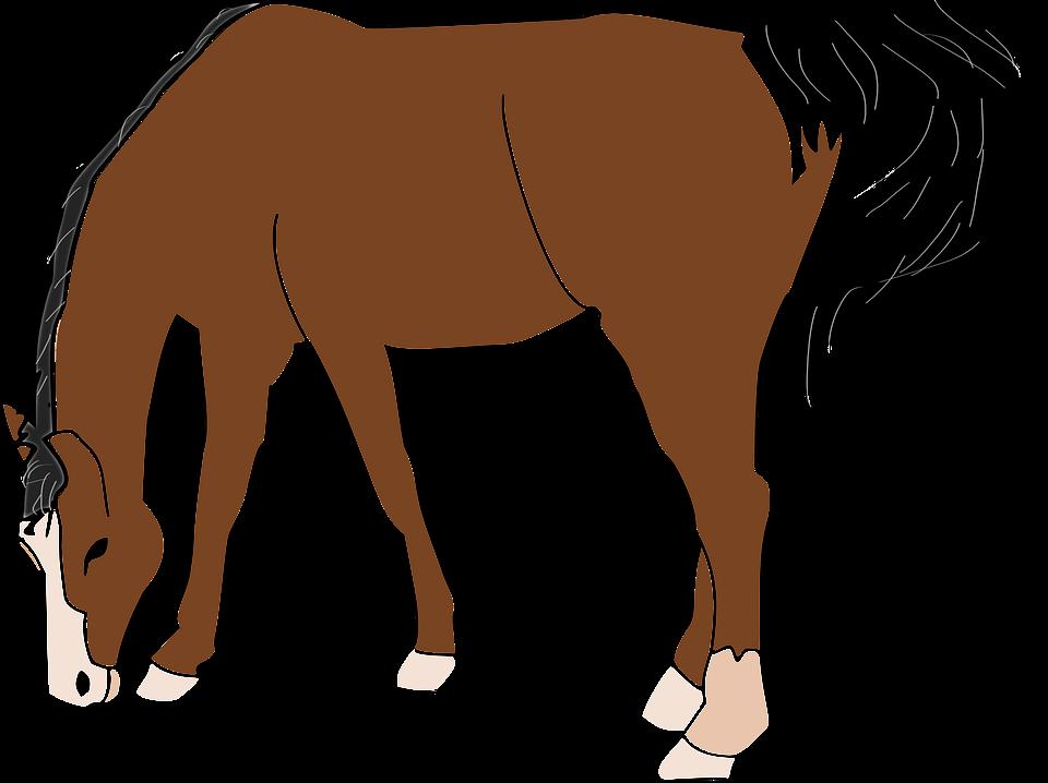 Horse frames illustrations hd. Horses clipart food
