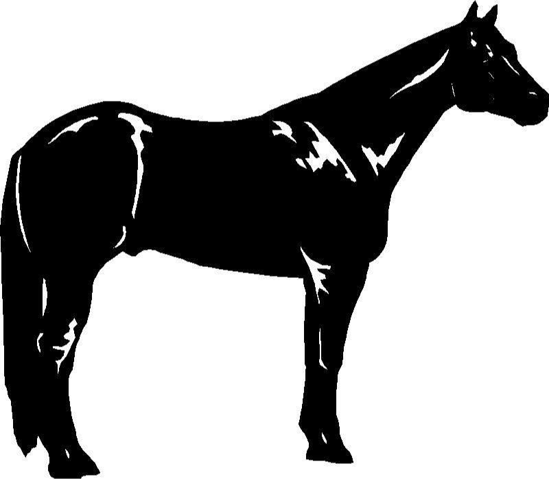 Free cliparts download clip. Horse clipart quarter horse