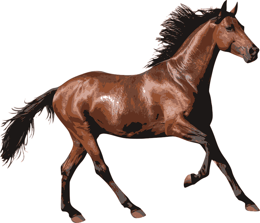 Brown transparent png stickpng. Horse clipart race horse