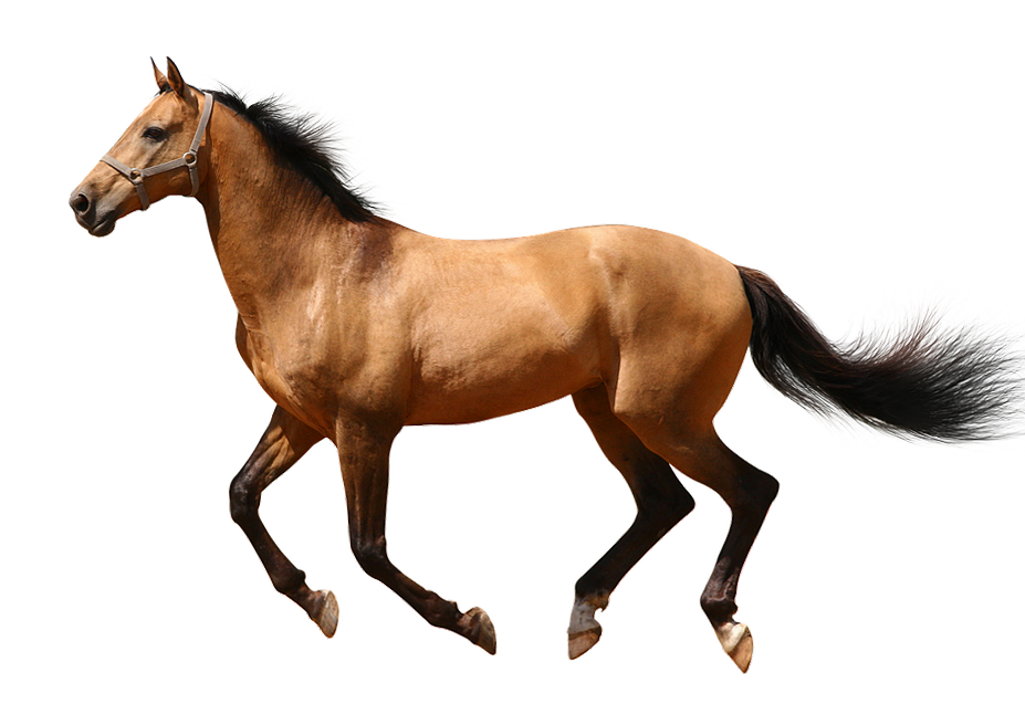 Running transparentpng download free. Horse clipart transparent background